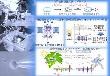 微生物膜輸送工学(発酵研究所)寄付研究部門